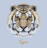 Tygrysia zwierzęca twarz Wektorowy Bengalia głowy portret Realistyczna futerkowa bestia tygrys Drapieżników oczy żbik Dużego kota ilustracja wektor