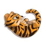 Tygrysiego lisiątka postać z kreskówki bawić się z jego ogonem Zdjęcia Royalty Free
