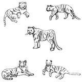 tygrysy nakreślenie ręką tła rysunku ołówka drzewny biel Obraz Royalty Free