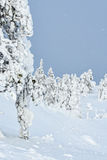 Tykky στη Φινλανδία στοκ εικόνα με δικαίωμα ελεύθερης χρήσης