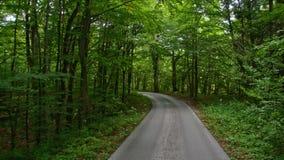 Tylna droga przez drewien w Chorwacja europejczycy zbiory wideo
