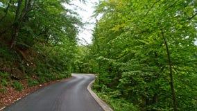 Tylna droga przez drewien w Chorwacja europejczycy zbiory