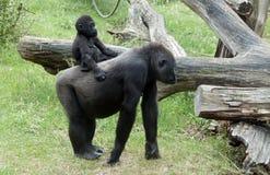 tylna małpa matkuje potomstwa Zdjęcia Stock