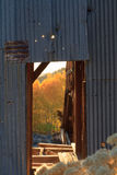 Tylni lekcy złoci Osikowi drzewa przez starej drzwiowej ramy przy abandone Obrazy Royalty Free