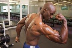 Tylni widok bez koszuli mięśniowy mężczyzna napina mięśnie Obrazy Stock