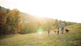 Tylni widok młoda rodzina z dwa małymi dziećmi i psem na spacerze w jesieni naturze zbiory wideo