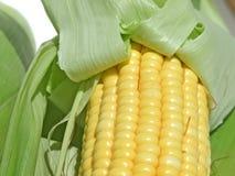 tylny kukurydzany świeży odosobniony biel Obraz Stock