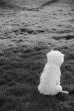 tylny psa pola trochę biel Zdjęcie Royalty Free