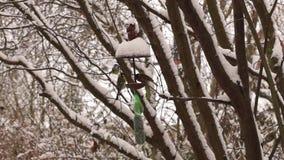 tylny ptasi błękitny koloru obwieszenia domu czerwieni usa biel jard zdjęcie wideo