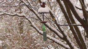 tylny ptasi błękitny koloru obwieszenia domu czerwieni usa biel jard zbiory