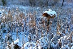 tylny ptasi błękitny koloru obwieszenia domu czerwieni usa biel jard Zdjęcie Stock