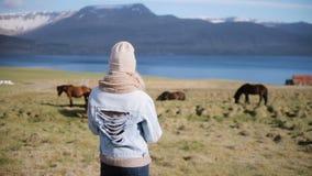 Tylny widok młoda elegancka kobiety pozycja na naturze i patrzeć na Islandzkim końskim pasaniu na polu zbiory