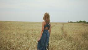 Tylny widok młoda kobieta wtedy obraca wokoło z blondynka włosy w długim błękit sukni odprowadzeniu przez złotego pszenicznego po zbiory wideo
