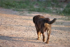 Tylny widok osamotniony psi odprowadzenie na ziemi Selekcyjna ostrość i płytka głębia pole Fotografia Royalty Free