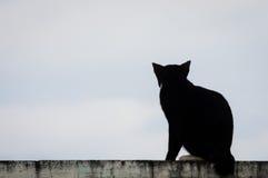 Tylny widok siedzieć czarnego kota Obraz Stock
