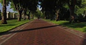 Tylny widok sport kobieta jogging w parku zbiory
