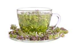 Tymiankowa zielona herbata Zdjęcie Royalty Free