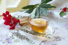 Tymiankowa ziołowa herbata zdjęcia stock