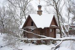 Tymotki IzotovHoly wiosna w zimie Zdjęcia Stock
