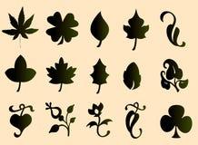 Typ der Blätter Lizenzfreie Abbildung
