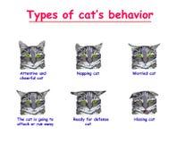 Typ kota zachowanie na białym tle Baczny i rozochocony kot, drzemanie, Martwiący się, kot iść atakować lub biegać ilustracja wektor