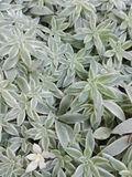 Typ ten roślina jest bardzo biedny Zdjęcie Royalty Free