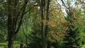 Type of autumn forest Feofaniya Kyiv stock video footage