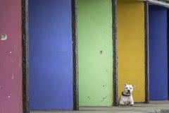 Type blanc chien de boxeur devant les abris colorés de bord de la mer Photo libre de droits