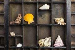 Type case with sea shells. Original brown vintage type case with sea shells stock images