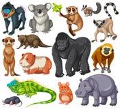 Type différent d'animaux de faune sur le fond blanc illustration de vecteur