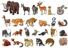 Type différent d'animaux sauvages sur le blanc Photo libre de droits