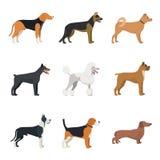 Type différent d'ensemble de race de chiens Image libre de droits