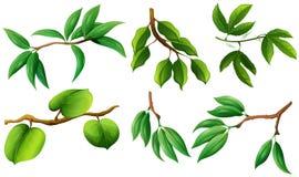Type différent de feuilles sur la branche illustration stock