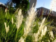 A type of grass. Landscape and grass Stock Photos