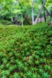 Type japonais de mousse et d'herbe dans une forêt verte image stock