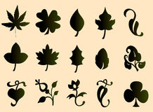 Type of leaves Royalty Free Stock Photo