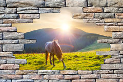 Type in the pasture with a horse Stock Photos