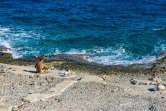 Type s'asseyant près de la mer image stock
