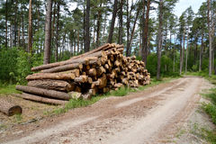Type on a stack of pine logs at the forest road. Wood procuremen Stock Images