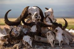Typer av djura skallar Fotografering för Bildbyråer