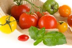 Typer av tomater med korgen Royaltyfri Foto