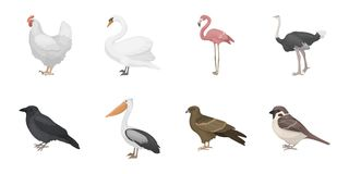 Types of birds icons in set collection for design. Home and wild bird vector symbol stock web illustration. Royalty Free Stock Image