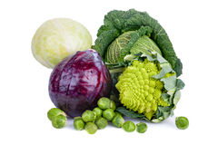 Types Of Cabbages Stock Images