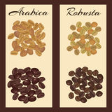 Types of coffee beans. Arabica and robusta coffee beans. Green and roasted. Vector illustration Stock Images