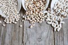 Types communs de haricots légumineuses Image stock