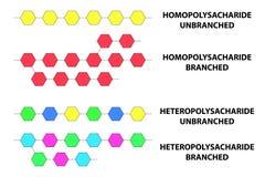 Types d'illustration de vecteur de polysaccharides Photographie stock