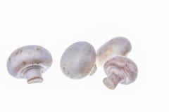 Types de champignons Photos stock
