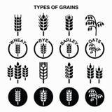 Types de grains, icônes de céréales - blé, seigle, orge, avoine Images stock