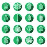 Types ensemble vert de feuilles de vecteur d'icônes Conception plate moderne Photo stock