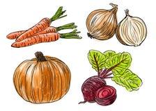 Types of fresh vegetables Stock Photos